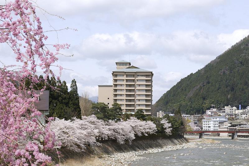 飛騨川沿いの桜<br>【4月上旬頃】