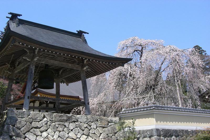 森山神社のしだれ桜<br>【4月中旬頃】