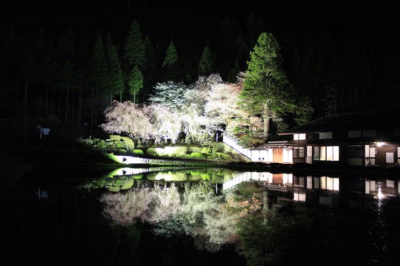 宮谷の桜<br>【4月中旬頃】