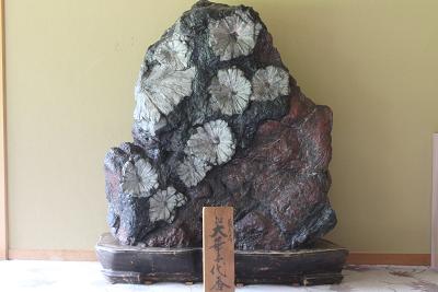 国の天然記念物『菊花石』 and 飛騨牛ミルフィーユ