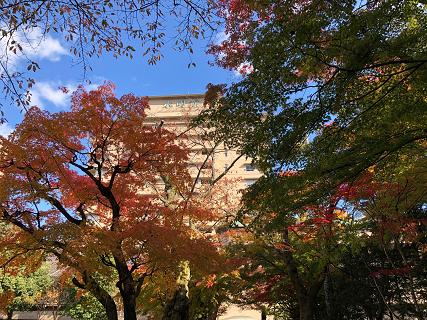 美しい秋のグラデーション