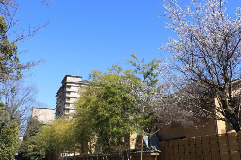 春の日差しを感じる日々~いのちの芽吹き~