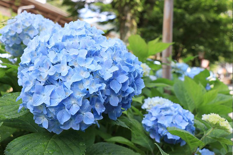 季節を彩るお花と和菓子~梅雨の晴れ間にのぞく青空~
