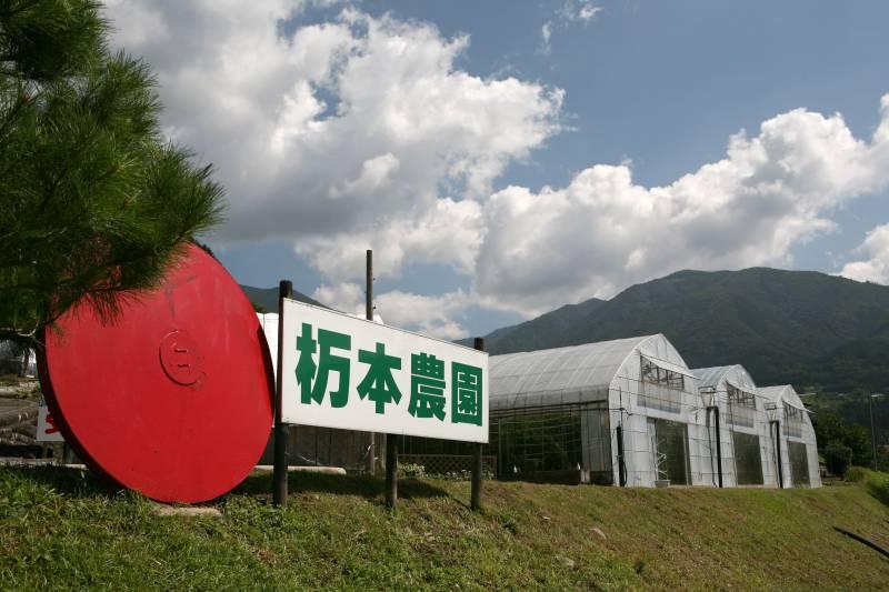 栃本農園のフルーツトマト狩り